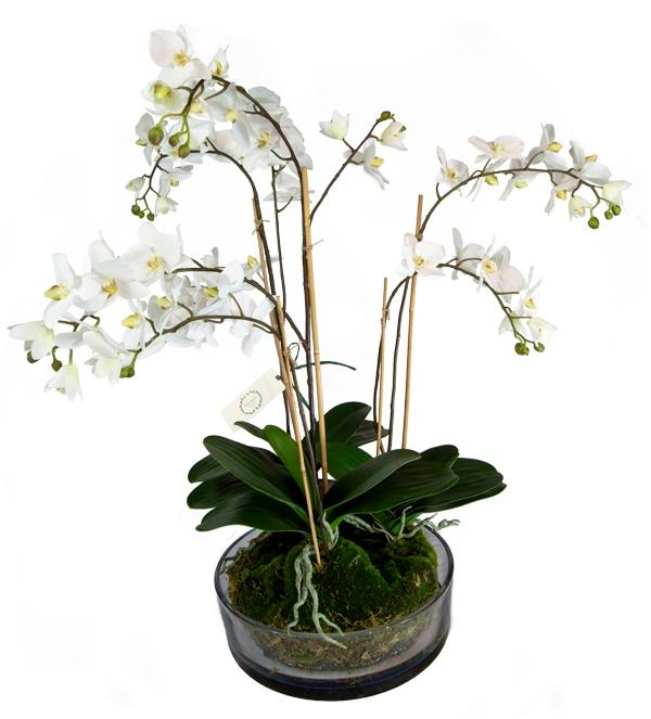 Vaso in cristallo con orchidee