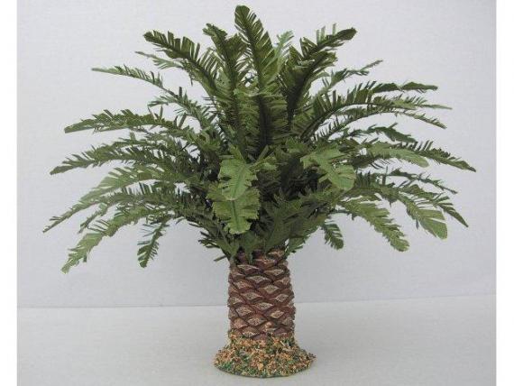 Palma nana cm. 16