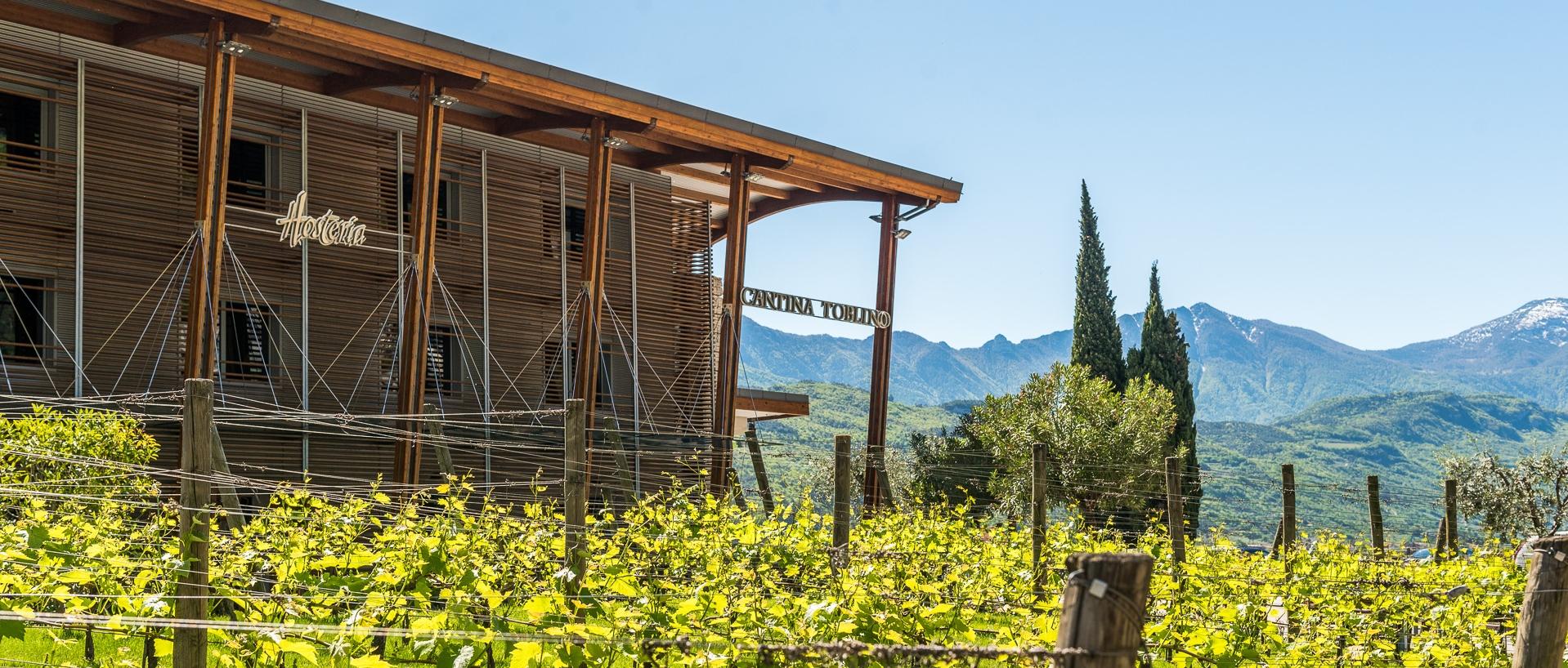Muffa Bianca In Cantina scopri i nostri vini - online shop - cantina toblino