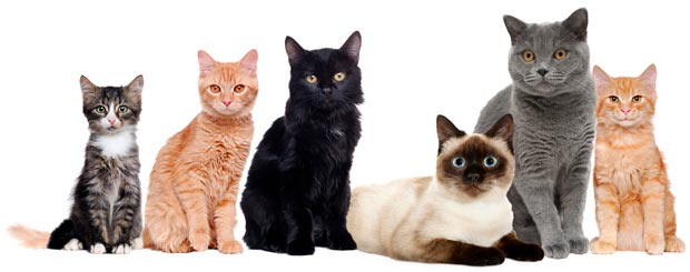 Unica Natura - Alimento per Tutta la Vita del tuo Gatto