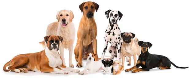 Unica Natura - Alimento per Tutta la Vita del tuo Cane
