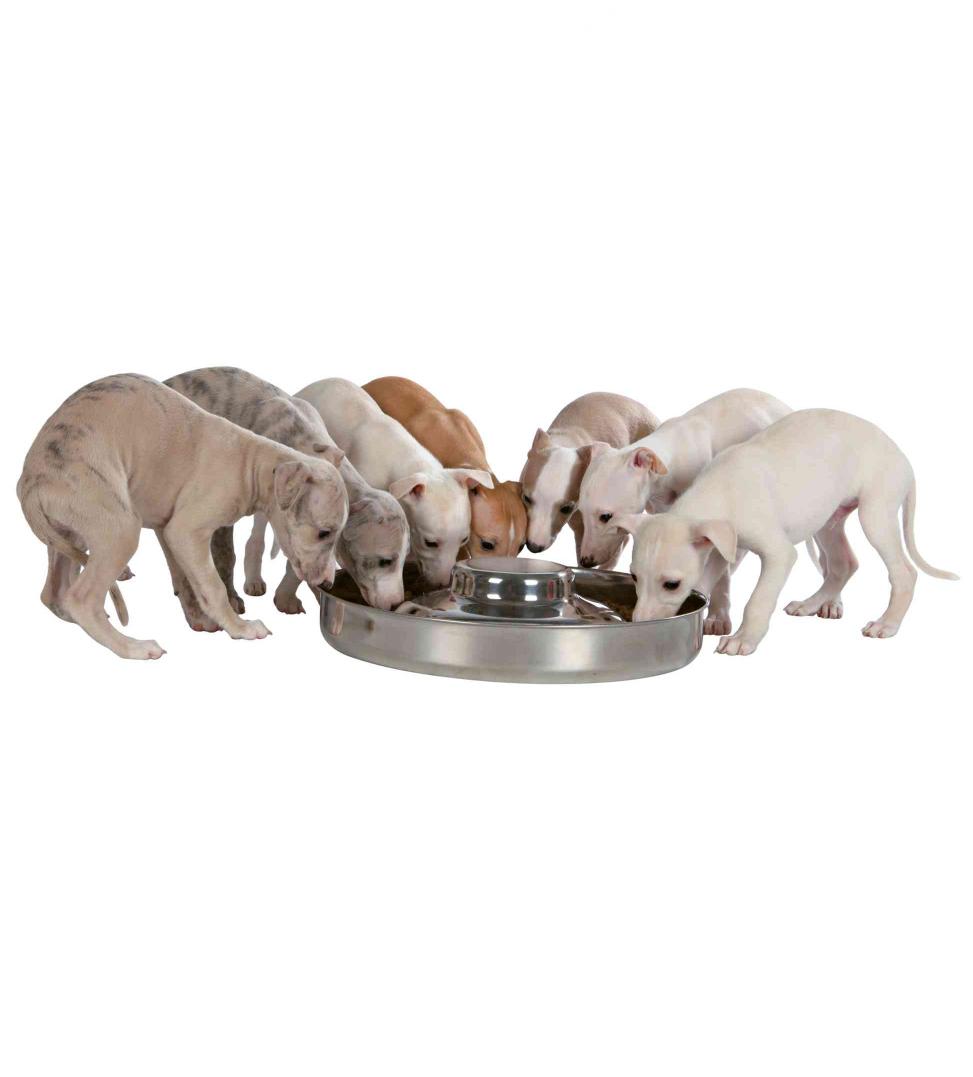Trixie - Ciotola Cuccioli - Acciaio Inox - 1.4 L