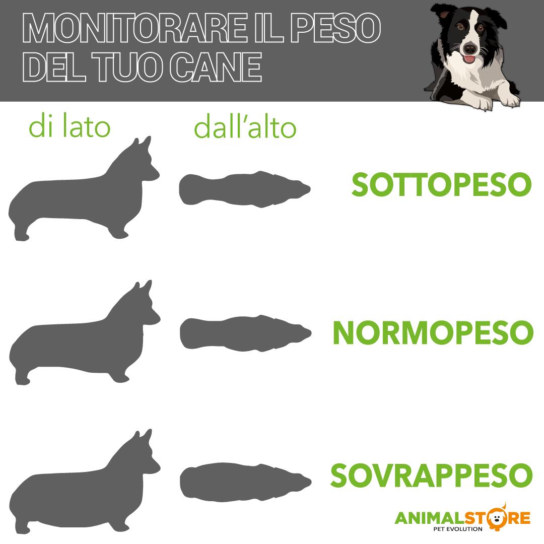 Hill's - Science Plan Canine - Medium Adult - Light al Pollo - 14 kg