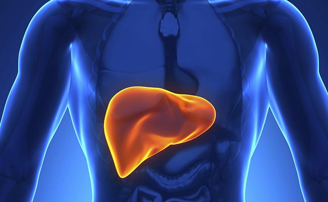 metabolismo fegato