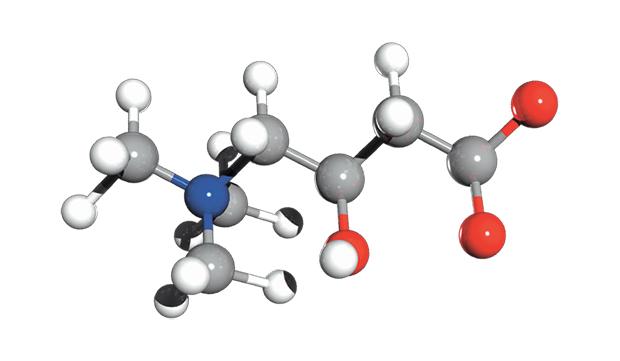 molecola carnitina