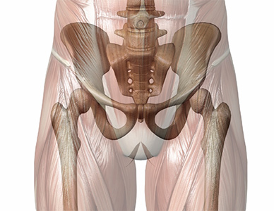 muscoli anche