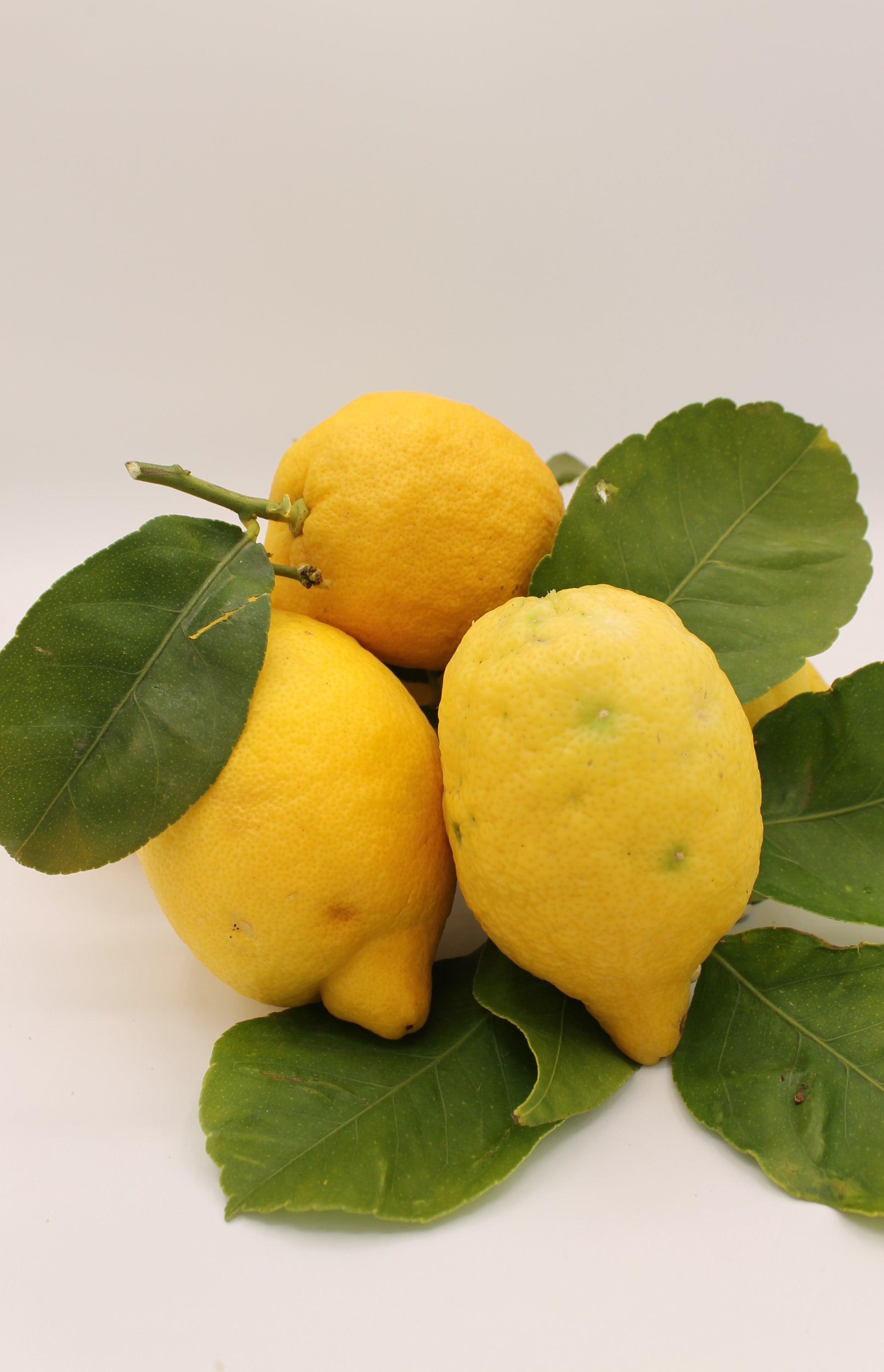 Limoni produzione Italia.