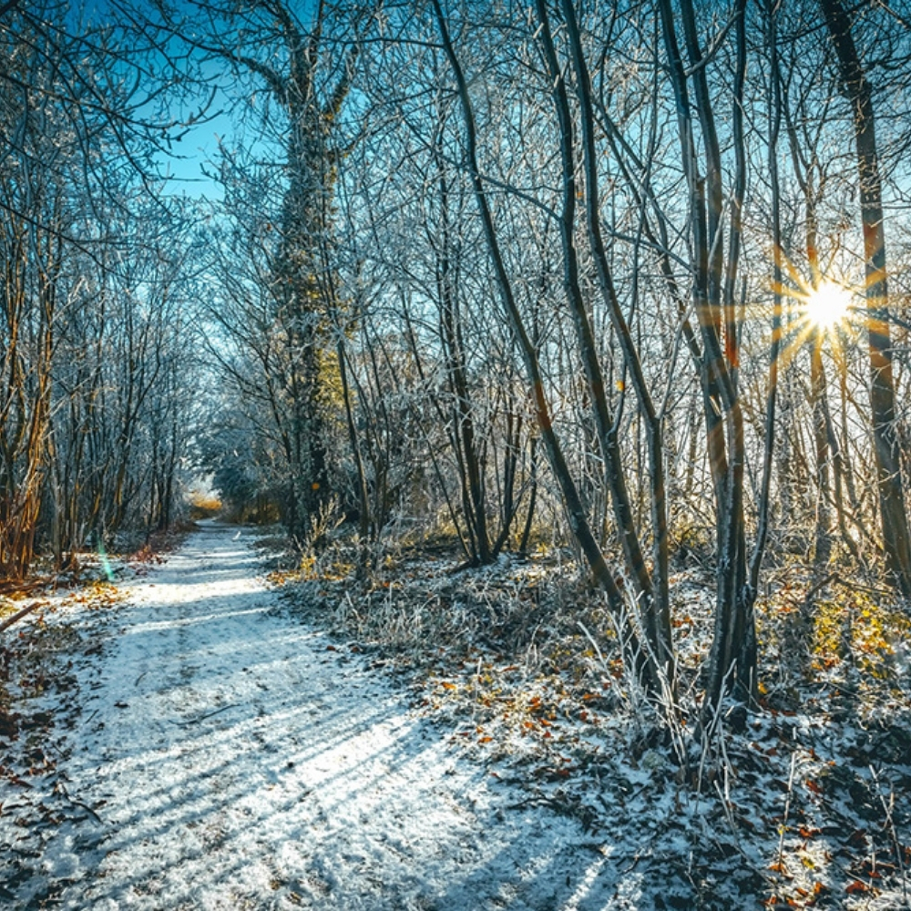 Best Trails To Experience In Winter